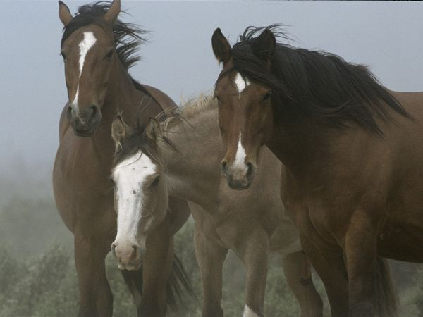 Patagonian Horses Photograph by Peter Essick